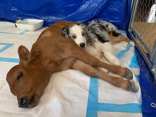 Ещё 26 замечательных примеров дружбы между животными, которые растопят ваше сердце
