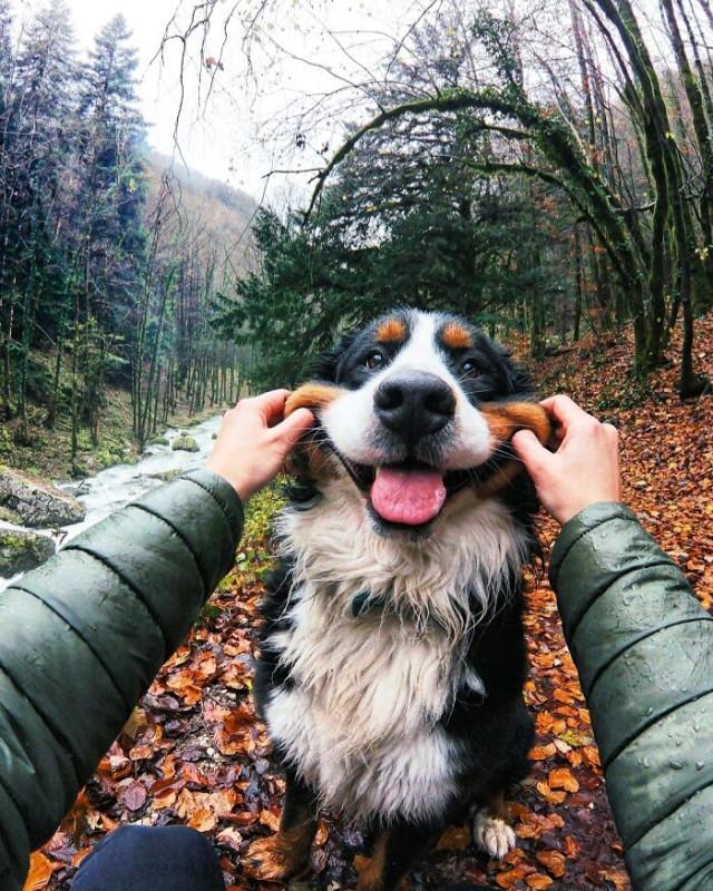 23 щекастые мордахи, которым невозможно не улыбнуться в ответ