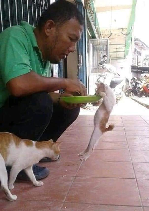 Забавные животные в прикольных картинках