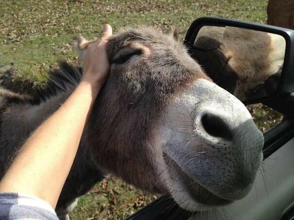 Субботний позитив в фотоприколах с животными