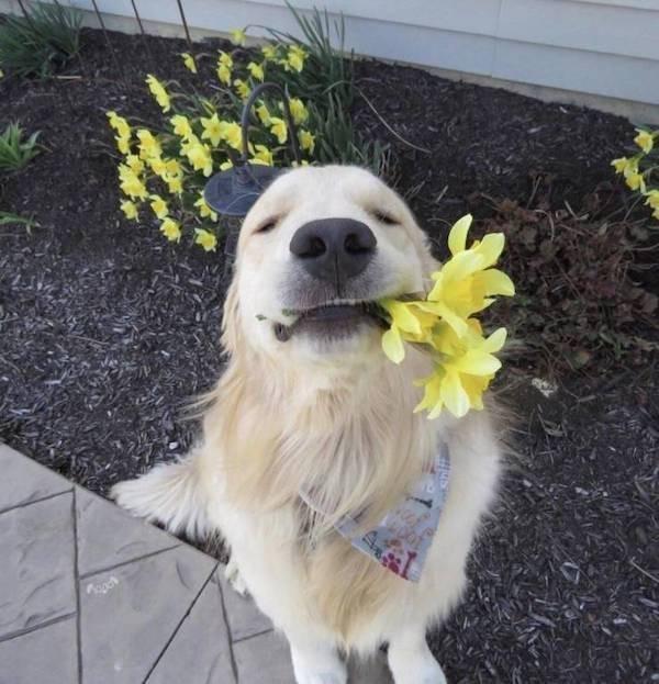 Фотографии с забавными животными, которые вызовут вашу улыбку