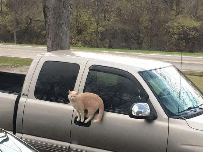 39 кошек там, где их быть не должно, но они оказались, потому что могу