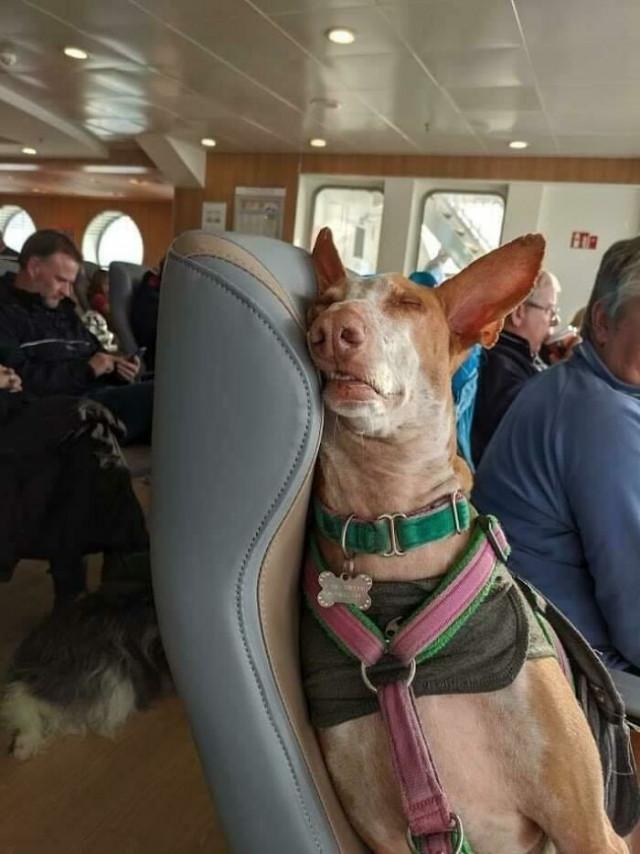 Очаровательные пассажиры, которых можно встретить во время путешествий