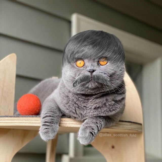 10 доказательств того, что котикам идёт любая причёска