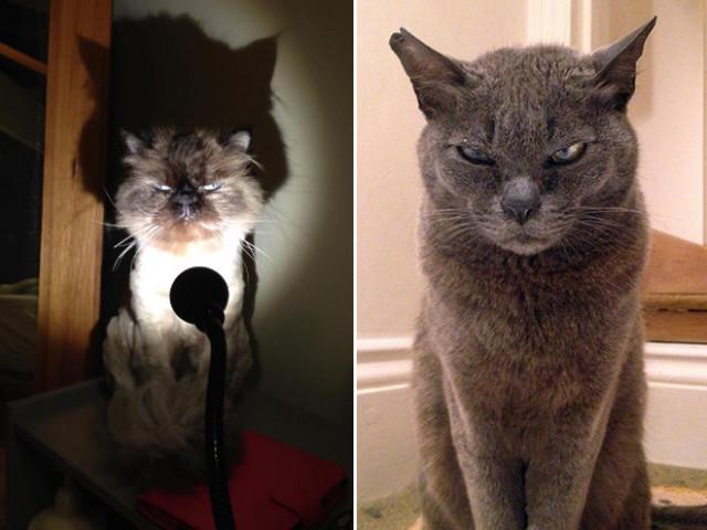 Кошки, которые явно замышляют что-то недоброе