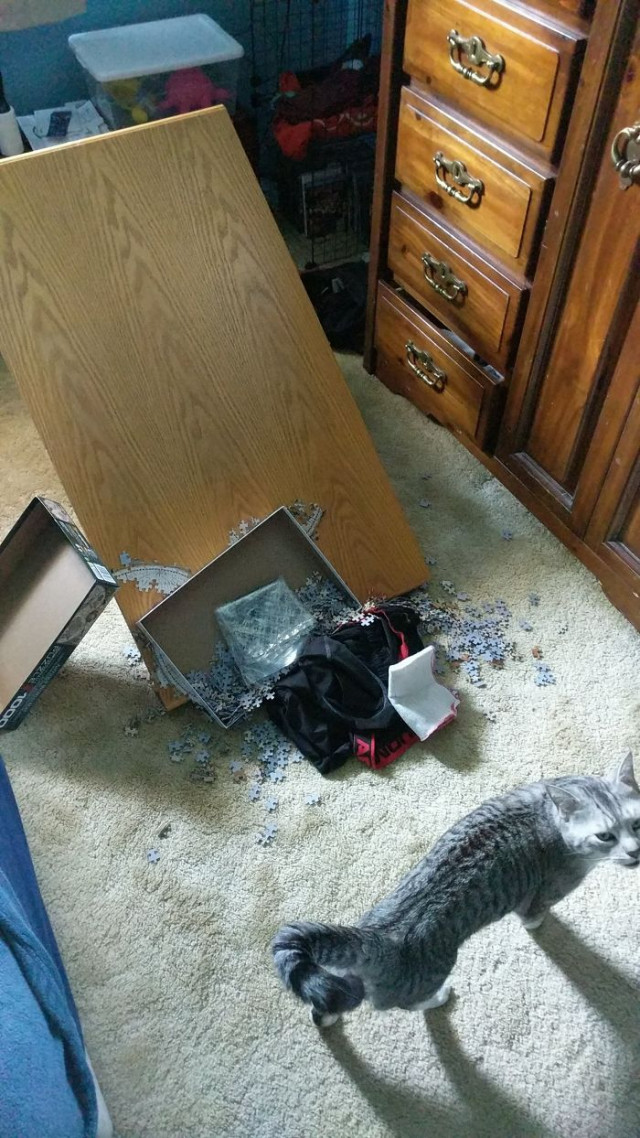 15 ответов на вопрос, почему собирать пазлы нужно в комнате, в которой нет кошки
