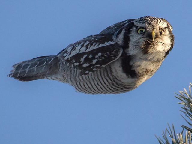 У птиц тоже бывают свои понедельники