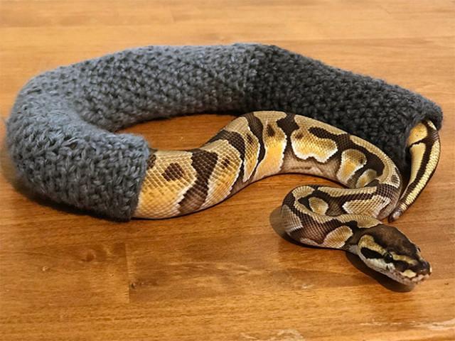 Вы когда-нибудь видели змею в свитере?