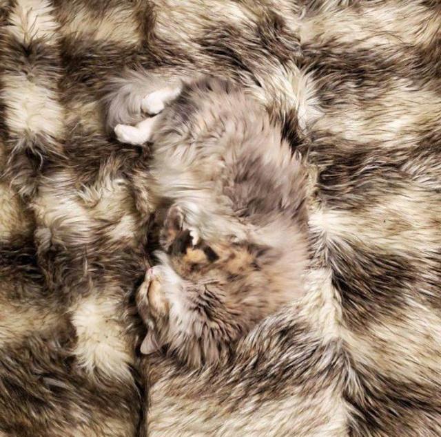 Домашние животные, для которых скрыться от хозяев — проще простого