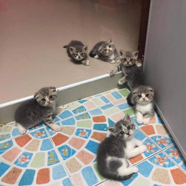 Интернет-пользователи делятся очаровательными фотографиями своих «незаконно маленьких кошек»