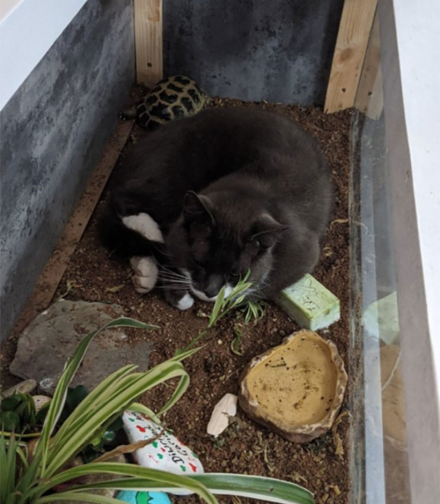 39 кошек там, где их быть не должно, но они оказались, потому что могут себе это позволить