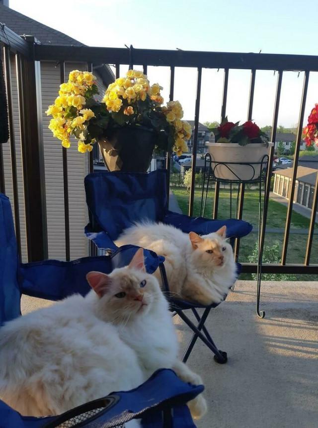 30 наглядных причин, почему две кошки лучше, чем одна