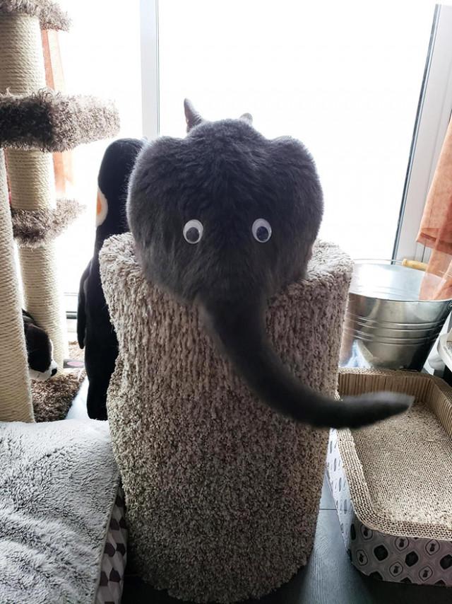 А вы знали, что кошачья жёппка с бегающими глазами похожа на слоника?