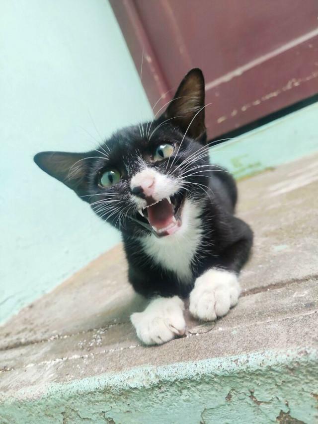 Фотографии котиков со звуком