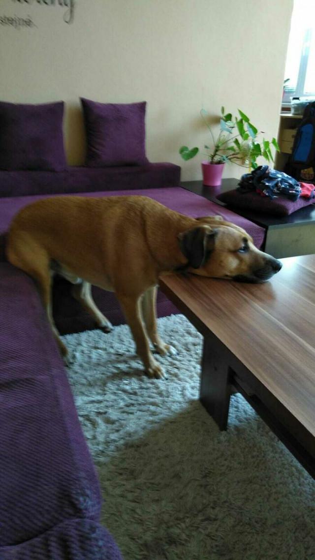 Собаки иногда «ломаются» и требуют «перезагрузки»