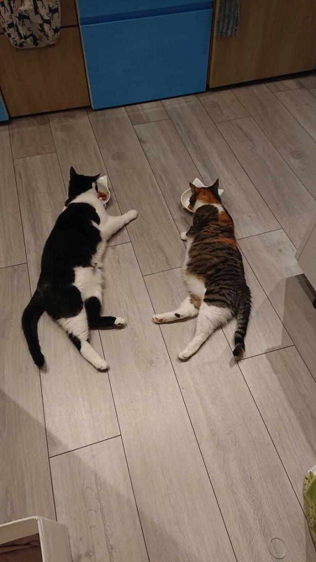 Ещё 25 наглядных причин, почему две кошки лучше, чем одна