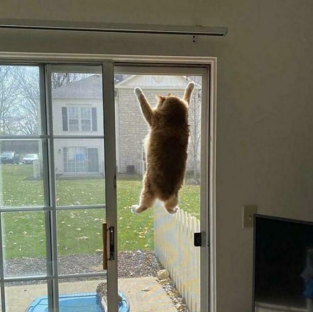 Приложение «Кошка» перестало работать