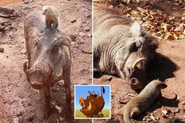 Фотографии с животными, которые вызовут улыбку и поднимут настроение