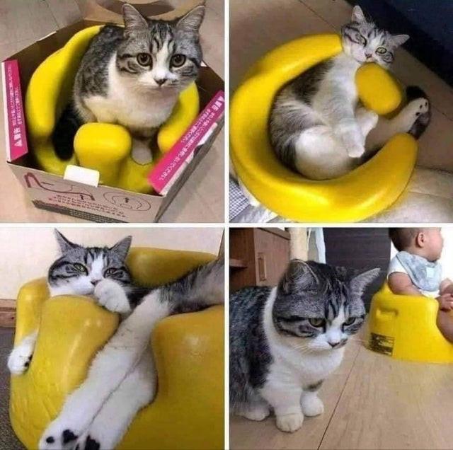 29 кошек там, где их не должно быть, но они оказались, потому что могут себе это позволить