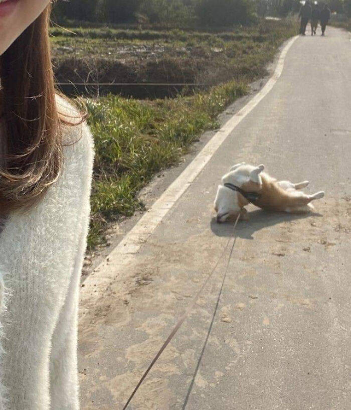 Забавные пёсели для вашего хорошего настроения (32 фото)