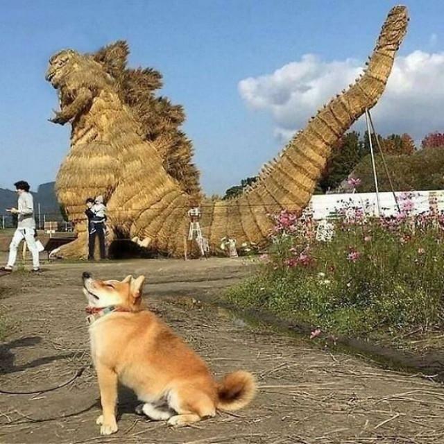 Большая коллекция фотографий с животными, которые подарят улыбку и поднимут настроение