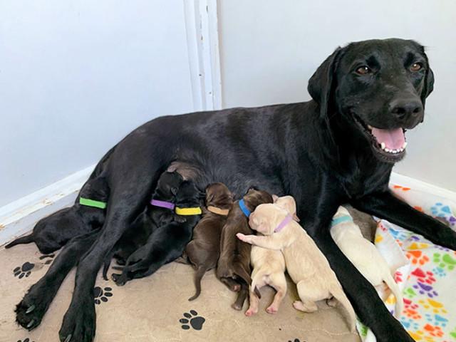Гордые мамочки со своими малышами