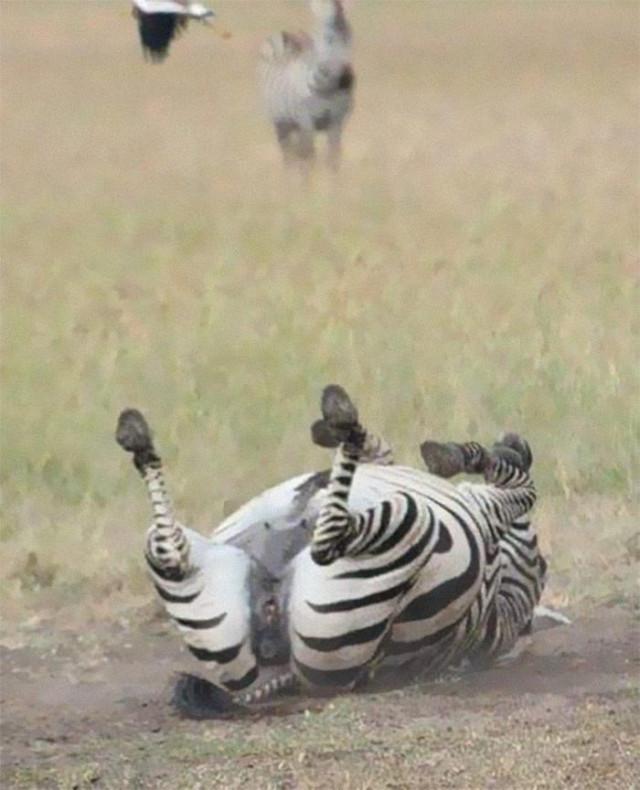 35 неудавшихся, но смешных и забавных фотографий дикой природы