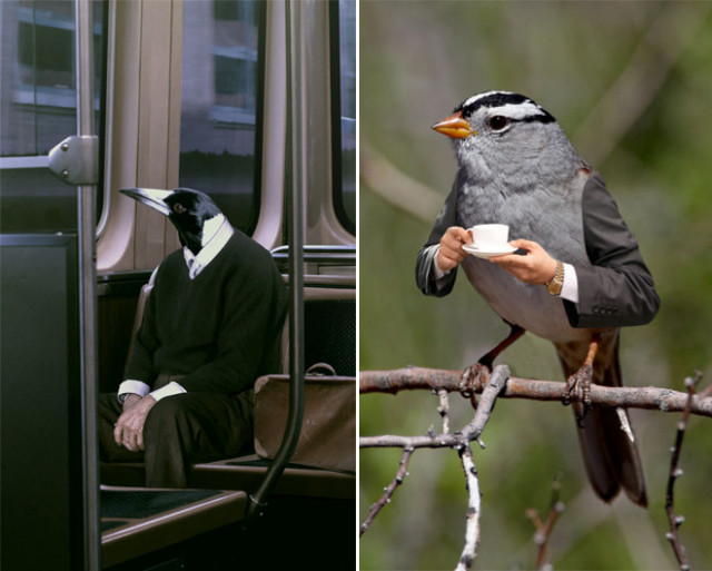 Птицы с человеческими руками, которые вызовут у вас улыбку