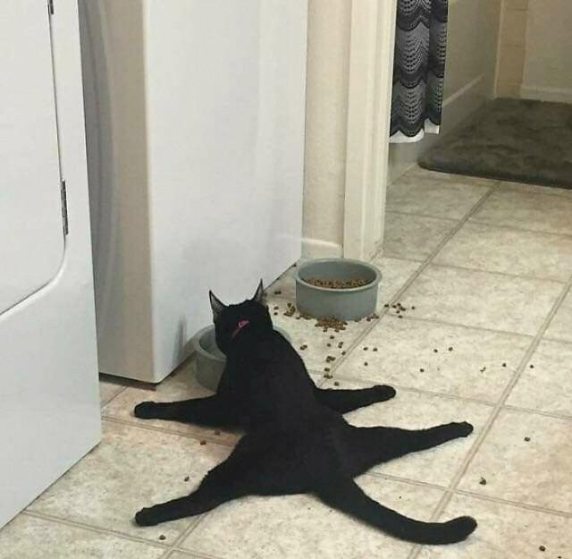 Кошки, которые «сломались»