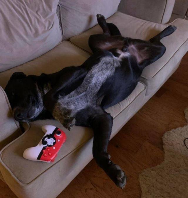 17 фотографий, которые доказывают, что животные могут отдыхать везде