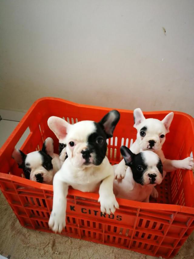 Очаровательных щенят вам в ленту