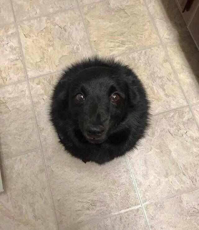 Instagram-аккаунт, в котором публикуются фотографии самых круглых в мире животных (без фотошопа)