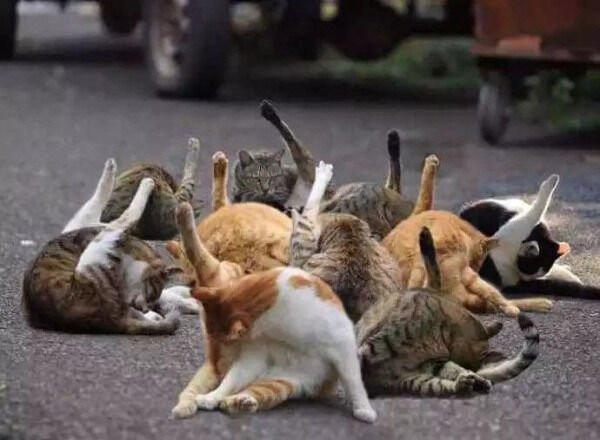 Смешные и забавные котики (23 фото)
