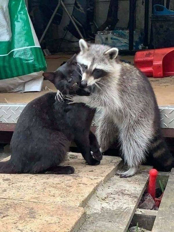 Забавных животных вам в ленту