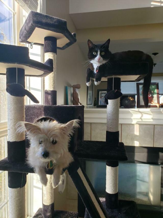 Ещё 29 собак, которые думают, что они — кошки