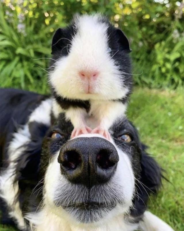 22 фотографии с животными, которые принадлежат разным видам, но похожи друг на друга как близнецы
