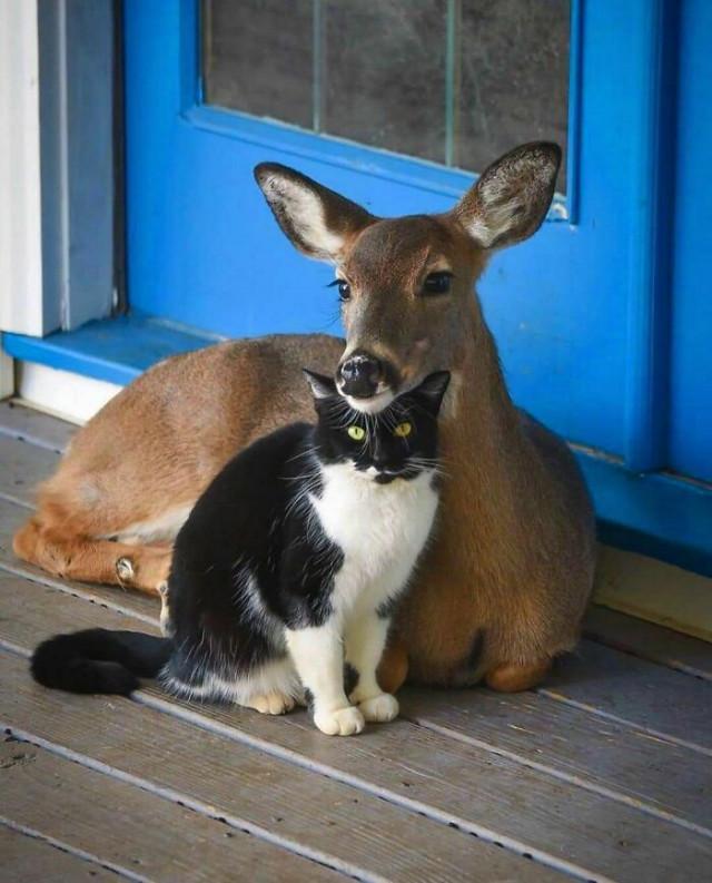 Смешные фотографии с животными для хорошего настроения