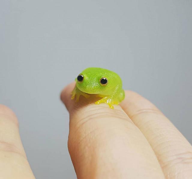 Ещё 20 фотографий настолько крошечных животных, что они помещаются на пальцах