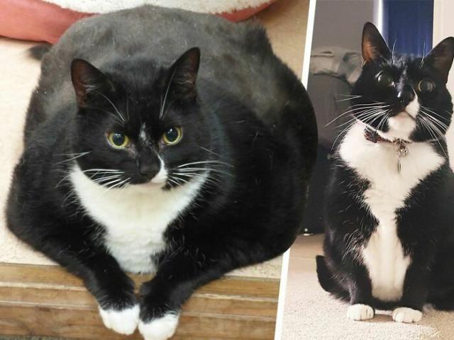 30 фотографий домашних питомцев, сделанных до и после их похудения