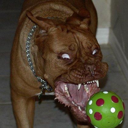 Аццкий пёс