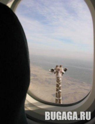 Жирафолёт