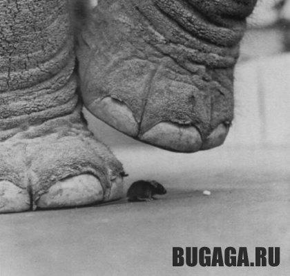 Слон и мышка