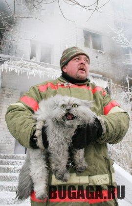 Кошка и пожарный