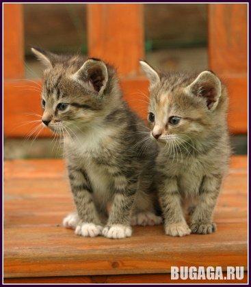Для любителей и ценителей кошек