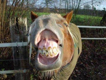 Лошади тоже улыбаюцца!)