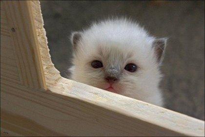 Проходите мимо или мысли бездомного котёнка