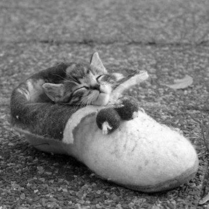 Прелесть обувная