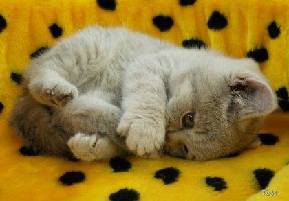 Кошки. Снова кошки