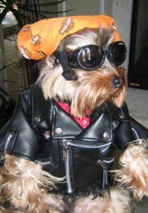 Стильный пес