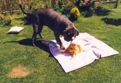 Собака-убийца загрызла младенца